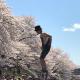 【一関院】桜とイベント