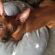 【くりはら整骨院】我が家の愛犬