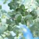 【整骨院greenroom一関/リラクゼーションFuu~】10月限定オイル